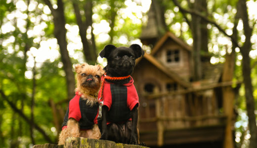 キャンプ場イヌミシュランFile#1(後編)北軽井沢スウィートグラスは人だけじゃなく犬にとっても楽園か?
