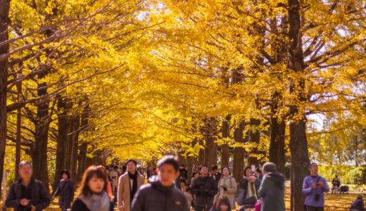 トウキョウ紅葉最前線(11/11~12/2017)