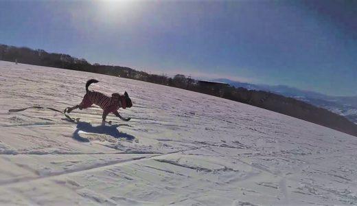 冬の北信濃の旅 …Days3(15, Jan. 2018) 野沢温泉スキー場はワンワンパラダイス
