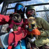 2021年冬改訂版 野沢温泉スキー場はワンワンパラダイス